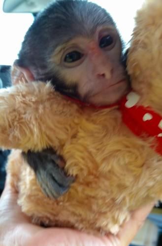 """Little Man"" offers his furry friend a warm hug."