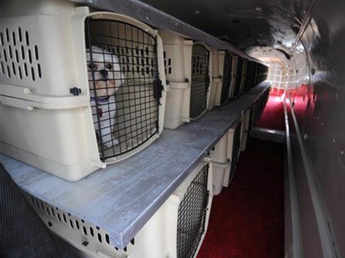 pet travel air