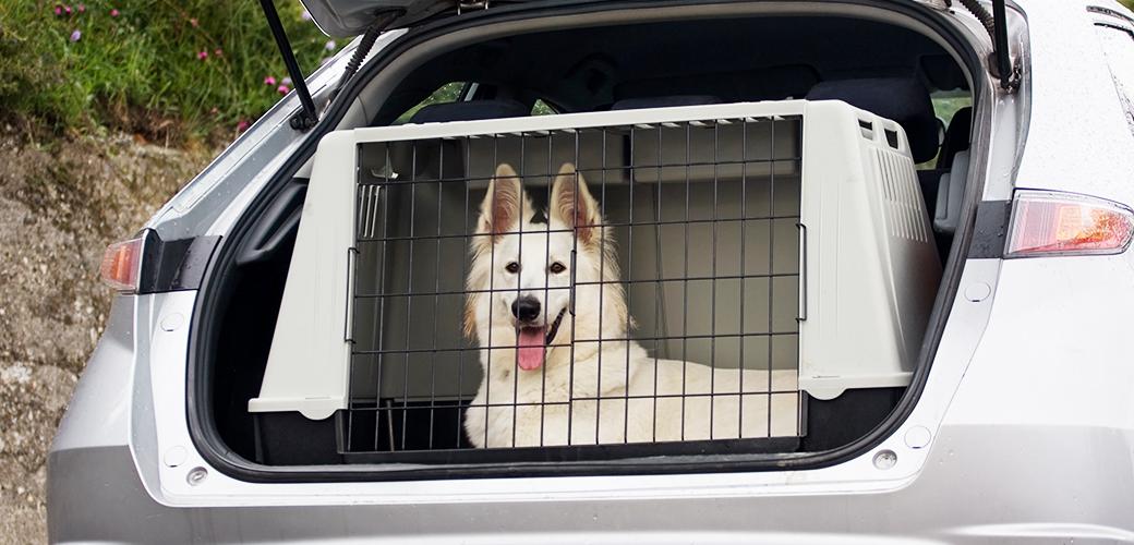 pet ground transport