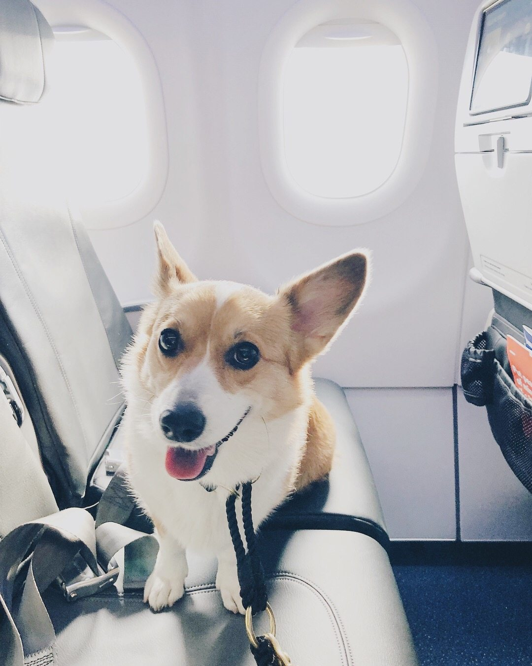 Can My Dog Fly With Me On The Plane