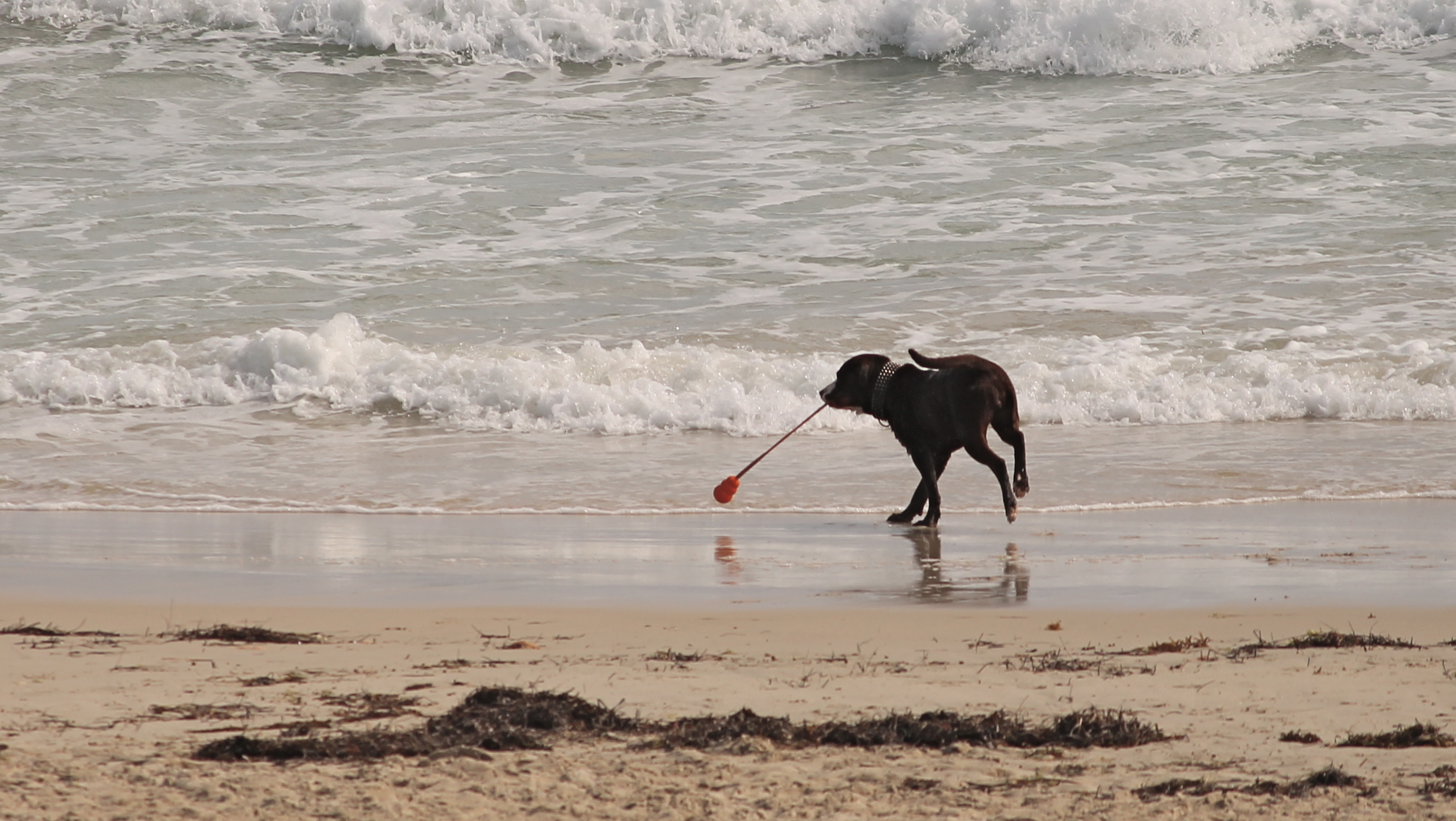 dog playing in sea water