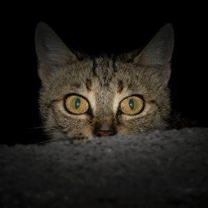 cat shipping