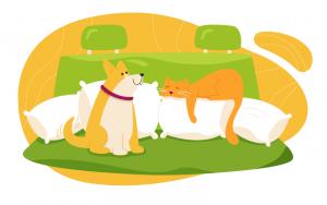 Pets on the back seat - pet transportation