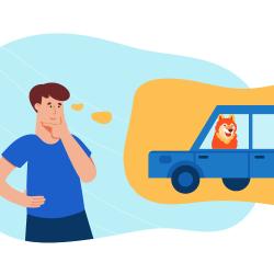 pet transportation myths debunked