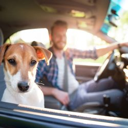 How much do pet transporters make? Overview of earning opportunities