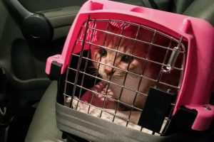 How to Transport a Cat Long Distance? 9 Best Tips by CitizenShipper