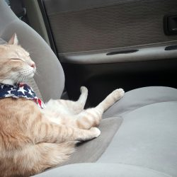 How to start a pet taxi service in five easy steps ?