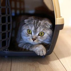 6 Best Cat Carriers in 2020: How to choose the Right Carrier?
