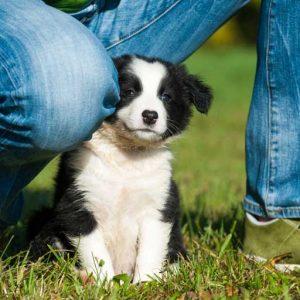 Can you send a puppy through mail