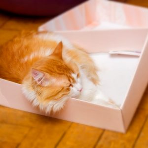 A cat laying down in a box