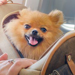 How do you ship a dog on a plane and it's Cost | Citizenshipper