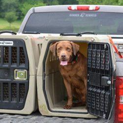 How do you transport a dog safely? 12 Pointer Checklist