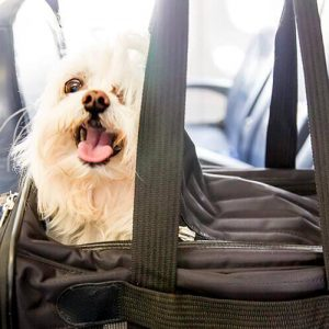 How to Ship a Pet Internationally: An Overview