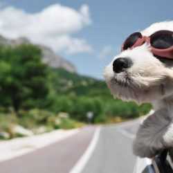 Pet Travel Tips: Staying Safe while Transporting Pets