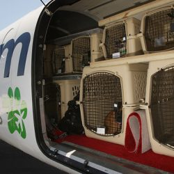 What Airlines Ship dogs? Top 4 Airlines Ranked