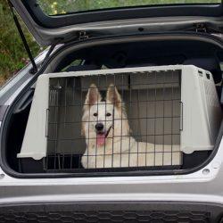 How much do dog transporters make? | Citizenshipper