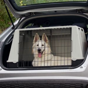 A white dog at the back of a car