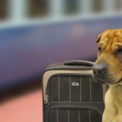 Six Tips on How to Transport a Dog Long-Distance