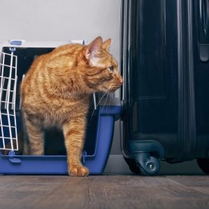 What airlines ship cats? Full List