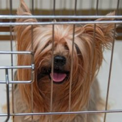 How To Choose The Right Travel Kennel For Your Dog ? | Citizenshipper