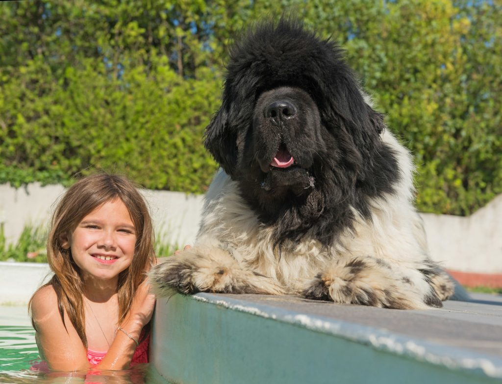 child and newfoundland dog in a swimming pool