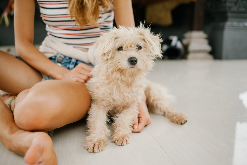 A woman and a puppy sitting together on the ground